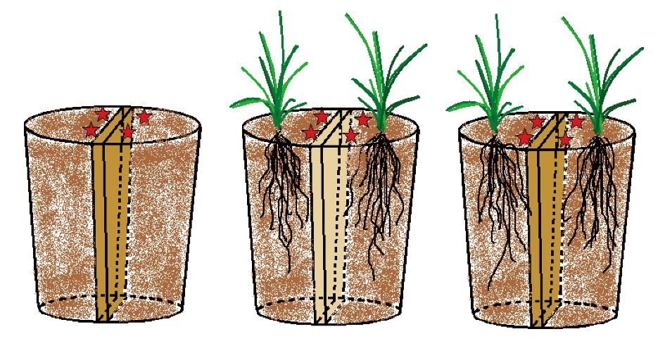 2ady电影网基于根际与凋落物际评价转bt水稻对土壤线虫群落的影响小米